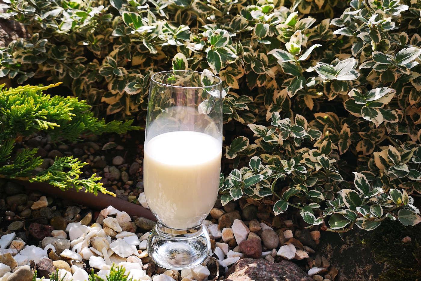 Augalinis pienas